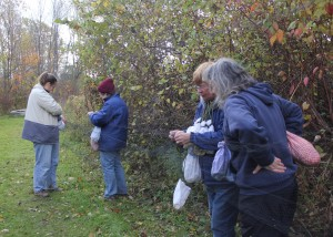 Andrea, Cindy, Marilyn & Kathleen net picking Chickadees