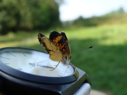 Red Admiral Says 'it's time to check the nets again!'Photo by Samantha Gonzalez
