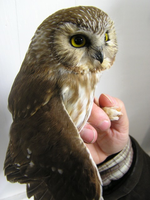 A second-year female - the last owl of the evening.