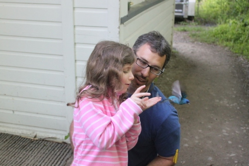 Jason's oldest daughter Abigail releases an Indigo Bunting.  She spent the morning making notecards about the entire banding process and the birds she released, to share with her class on Monday.