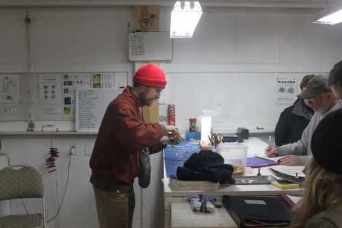 Charley Eiseman back at the banding table Photo by Ryan Kayhart