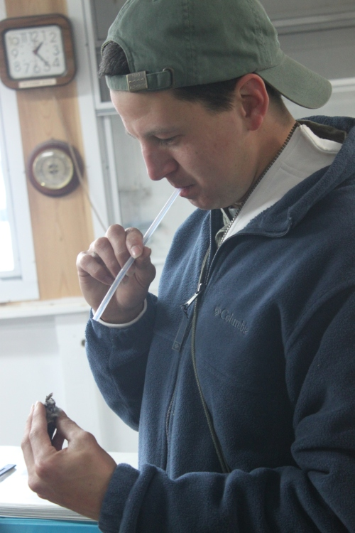 Ryan Examines the Spring's First Banded Hummingbird Photo by Betsy Brooks