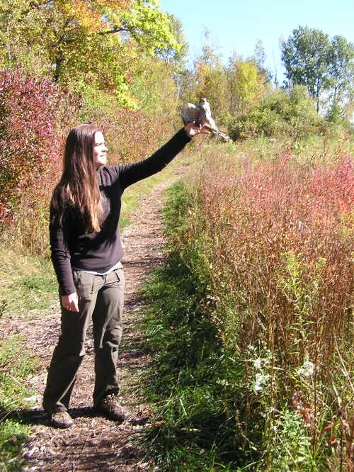 Katie releases the first Sharp-shinned Hawk of the season.