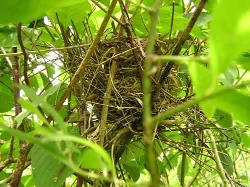 The First Nest . . .